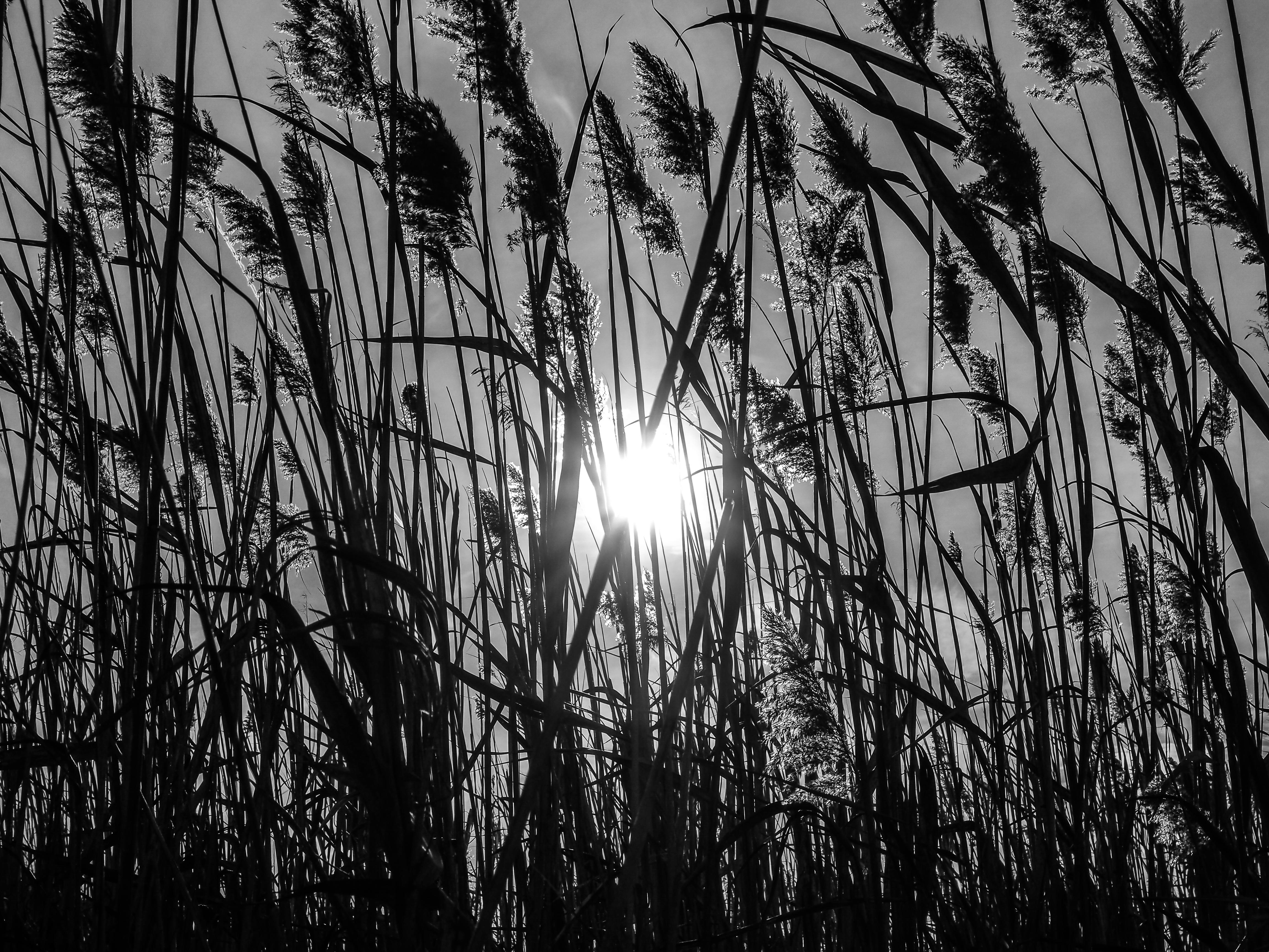 Sea Reeds Falmouth, Maine